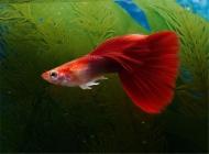 观赏鱼五爪虫病的治疗方法