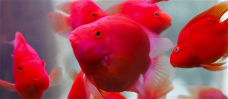 观赏鱼白点病的治疗方法