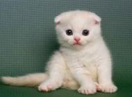 猫鼠疫有哪些症状