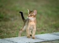 猫鼠疫的发病原因有哪些
