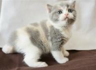治疗猫免疫缺陷病毒的方法有哪