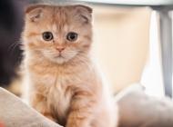 为何会引起猫病毒性上呼吸道感染