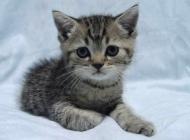 猫免疫缺陷病毒有哪些症状
