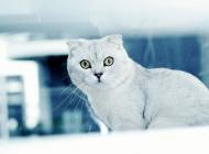 引发猫免疫缺陷病毒的原因有哪些
