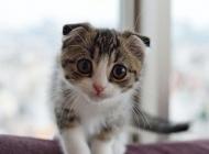 猫病毒性上呼吸道感染的症状有哪些
