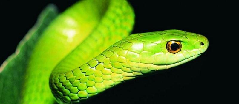 宠物蛇疾病-波奇网百科大全
