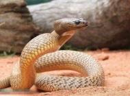 蛇枯尾病有哪些病因及症状