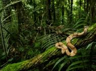 如何防治蛇枯尾病