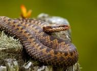 蛇霉斑病的病因及症状是什么