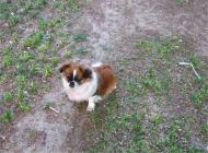 犬尿失禁的症状有哪些