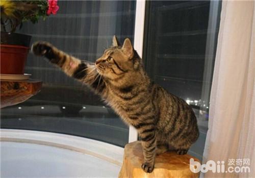 买猫需要注意哪些事项