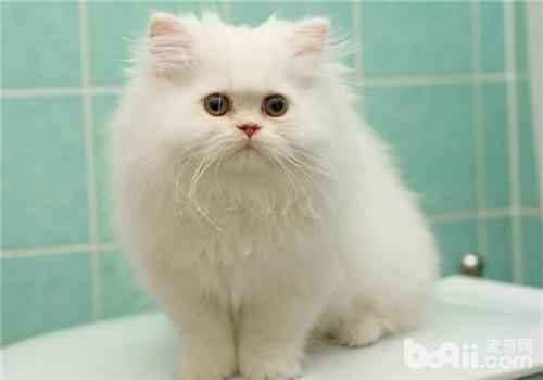 猫咪贫血的治疗方法