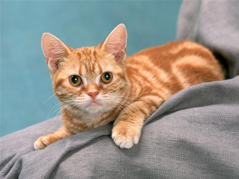 在家给猫咪洗澡的那些事你真都知道吗 ——除了防着凉、用专用沐浴露外还要注意什么