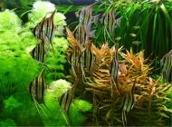 鱼缸选购及保养的小常识