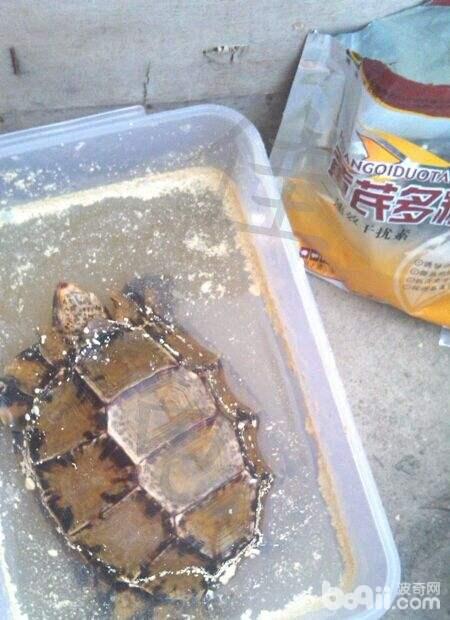 介绍一款自配的宠物龟健康调理品