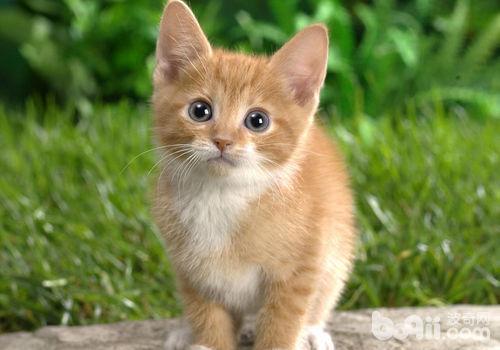 冬季猫咪饲养注意事项有哪些