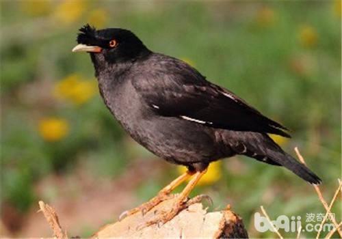 幼鸟的几种常见疾病及处理方法
