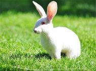 如何正确的抱起兔兔