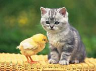 如何照顾肠胃不好的猫咪