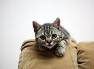 导致猫咪脱毛的常见原因有哪些