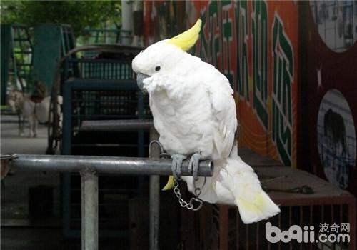 鹦鹉中暑的症状表现-轻博客