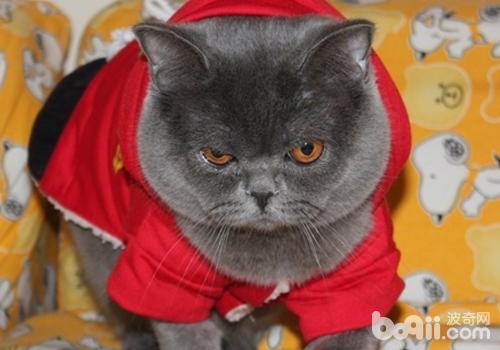 猫丝虫病是怎么引起的-轻博客
