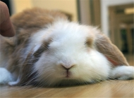 如何制止兔兔乱翻垃圾桶
