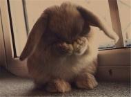 降低兔兔绝育风险的五个因素