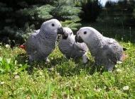 宠物鸟人工喂药的注意事项