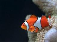 如何为观赏鱼杀菌杀虫