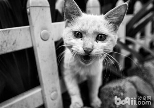 壁纸风景猫咪田园
