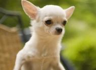 怎么才能给宠物顺利开出检疫证明
