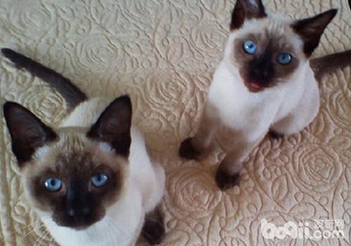 猫咪的喉咙是否卡住了