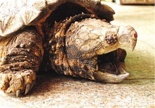 """动物园""""龟满为患""""为哪般"""