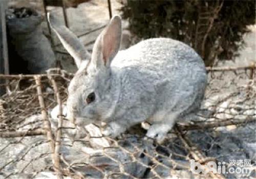 帶你了解兔兔的胡須