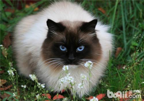 哪类猫咪喜欢搞破坏的原因之如何制止它们