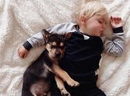 适合孩子饲养的狗狗有哪些