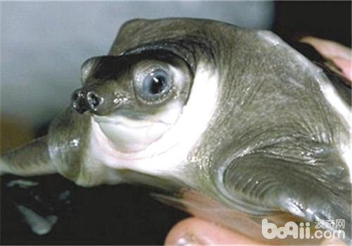 宠物龟混养注意事项