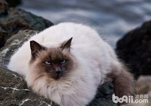 关于猫癣的一些小知识
