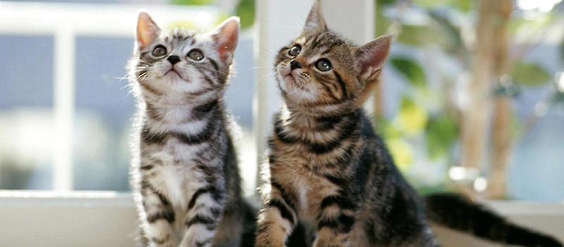 性格,生理问题等其他因素也会造成猫咪喜欢打架,因此不能一概而论.