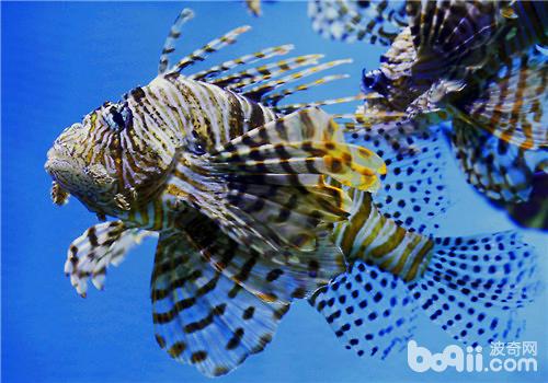 壁纸 动物 海底 海底世界 海洋馆 水族馆 鱼 鱼类 500_350
