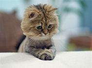 母猫食亲仔猫的原因之如何照顾小猫