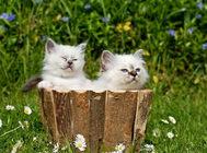 春节与猫咪分享人类食物要当心