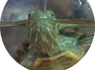 僵龟是什么?