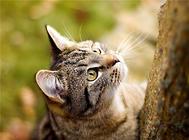 家里有猫味儿怎么办?