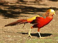 如何选择合适的观赏鸟