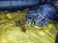 水龟饲养用具之如何选择加热棒