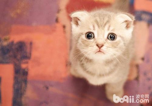 手挑选,其实,在挑选猫粮的时候要注意三点,首先要根据家中猫咪的自身