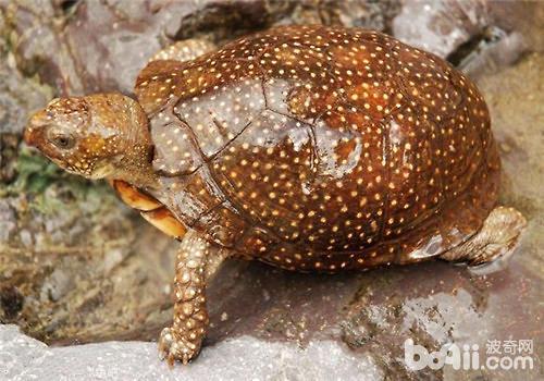 如何分辨龟的不同习性