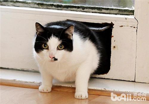 宠物猫太胖了怎么办?